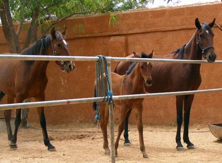 dscf5227-horses.jpg
