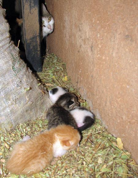 img_4857-kittens.jpg