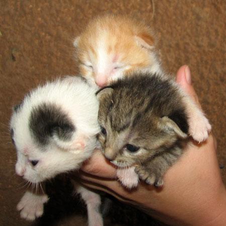 img_4866-kittens.jpg