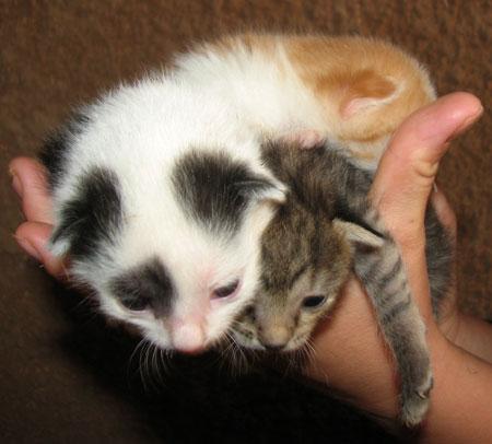 img_4874-kittens.jpg