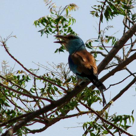 200905-birdwatch-img_9877.jpg