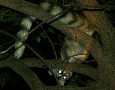 200905-geret-cat