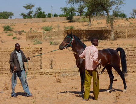Horse Mating With Human horse talk: horse breeding in niger esther ...