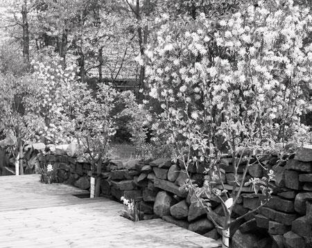 100_2190-garden