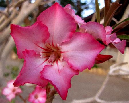 201006-flower
